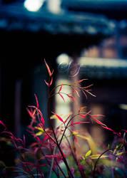 - fragile pieces - by SunsetSilence