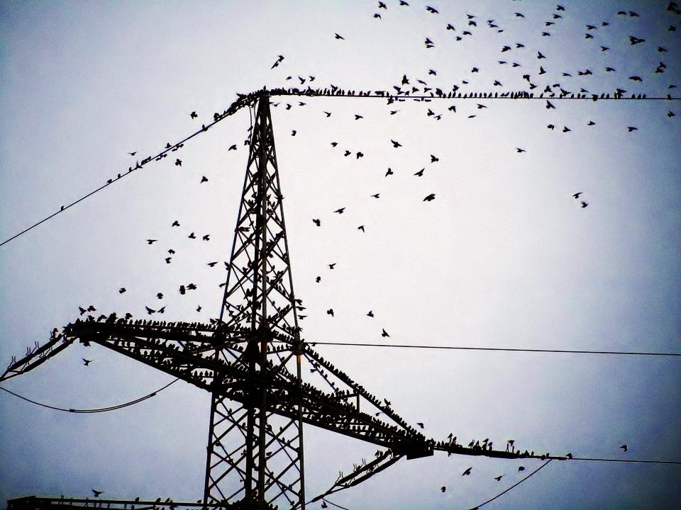 Birds. by DreyerDan