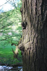 bumpy tree by shukumei19