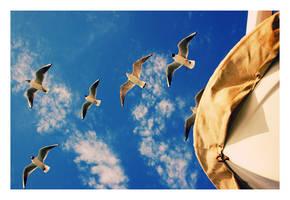 ..follow us..said gulls to us