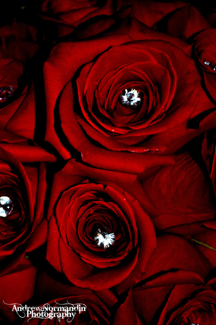 roses_are_red_yet_diamonds_last_forever_by_andrewnormandinphoto d4u2r1i