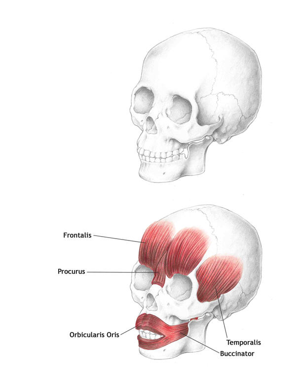 Muscles of the Face-Part 1
