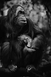 Feeding Baby by astra888
