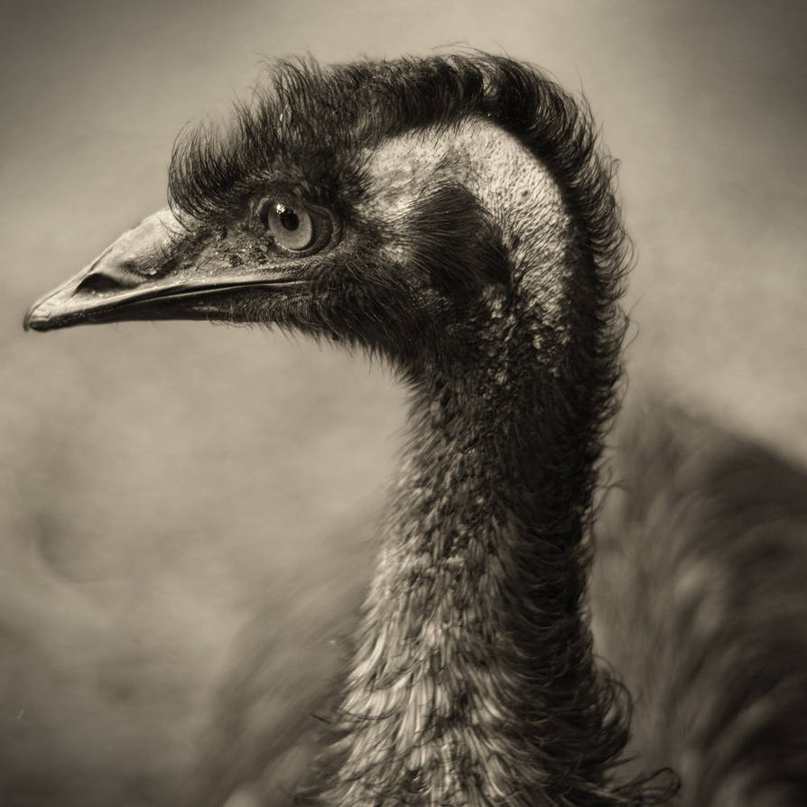 Emu Profile