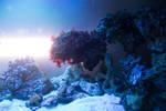 Underwater 5321