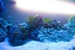 Underwater 5318