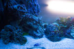 Underwater 5317