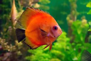 Exotic fish 5062 by zummerfish