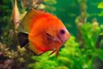 Exotic fish 5062