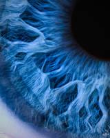 Iris by splaine7