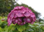 Flower Stock 5