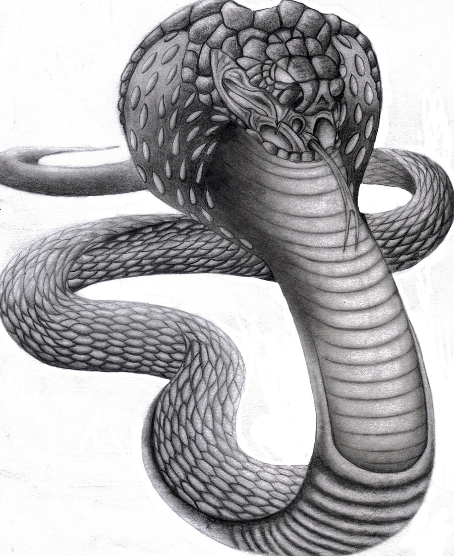king cobra by hardeeps...