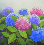 colourful hydrangeas