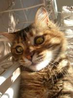 my dear cat-2 by Hydrangeas