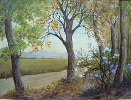 trees by Hydrangeas
