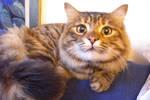 MY LOVELY CAT-1
