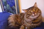 A LOVELY CAT