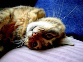 LOVELY CAT by Hydrangeas