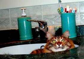 CAT IN THE SINK by Hydrangeas