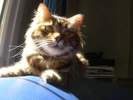 MY CAT-1 by Hydrangeas