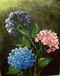 THREE HYDRANGEAS