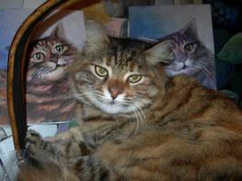 my pretty cat-1 by Hydrangeas