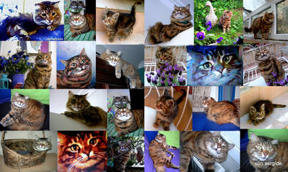 cat-collage by Hydrangeas