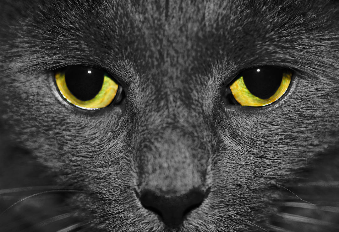 Grey Grey by Souzay