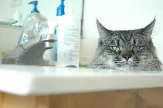 Eren Loves to Sleep in the Sink...