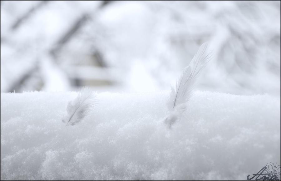 Feathers by Yoyoba-chan