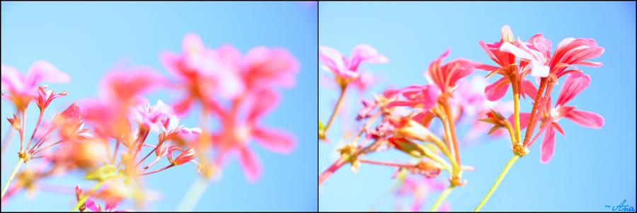 Focus by Yoyoba-chan