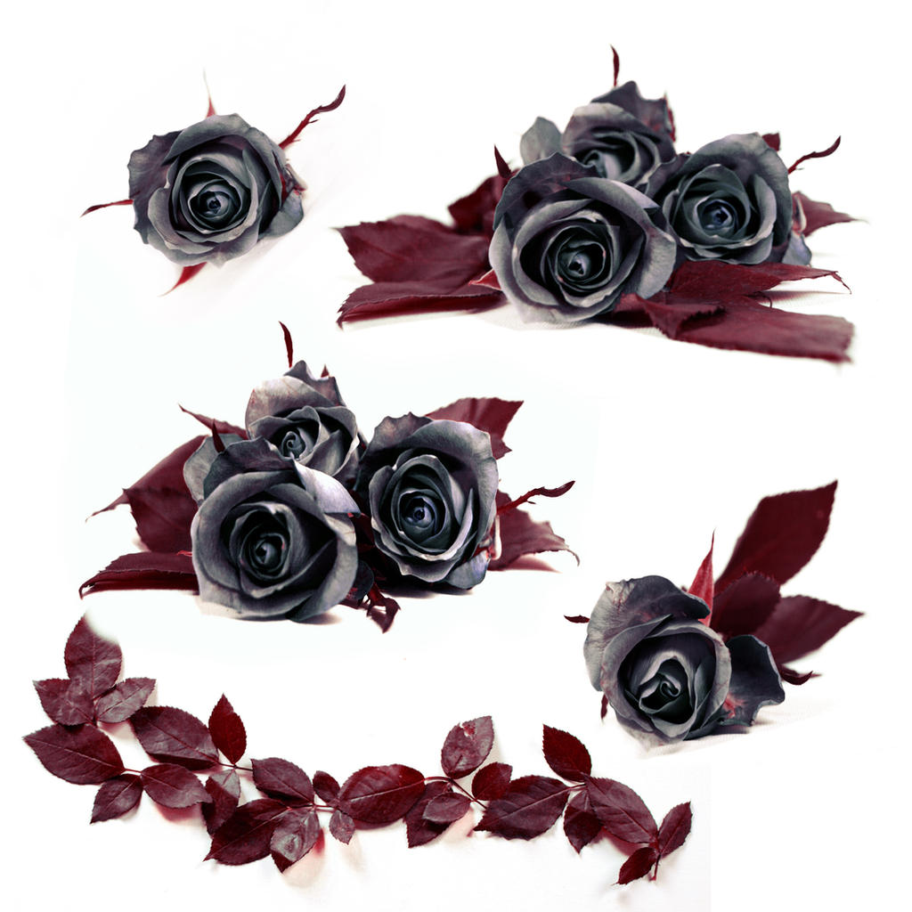 Stock Dark Roses by E-DinaPhotoArt