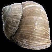 Stock Snail Shell 2 PNG by E-DinaPhotoArt