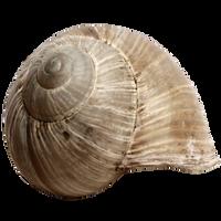 Stock Snail Shell PNG by E-DinaPhotoArt