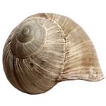 Stock Snail Shell PNG