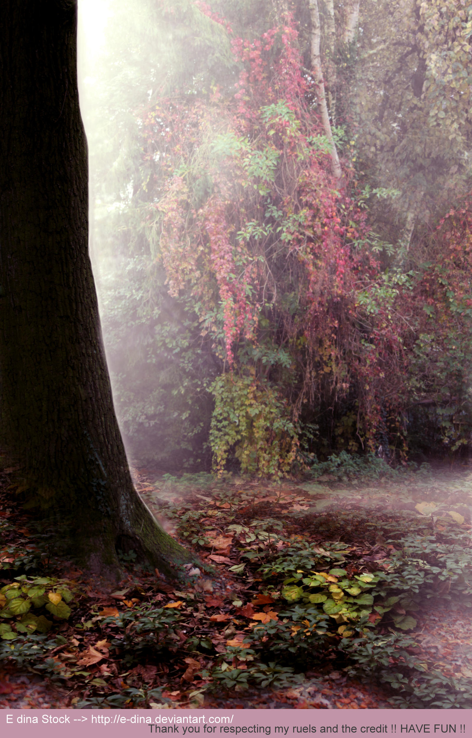 Premade BG Enchanted Forest 2