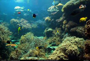 Stock Underwater by E-DinaPhotoArt