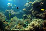 Stock Underwater