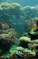 Stock Underwater 4 by E-DinaPhotoArt