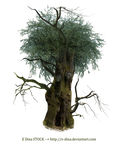 HQ PNG Stock Tree Man