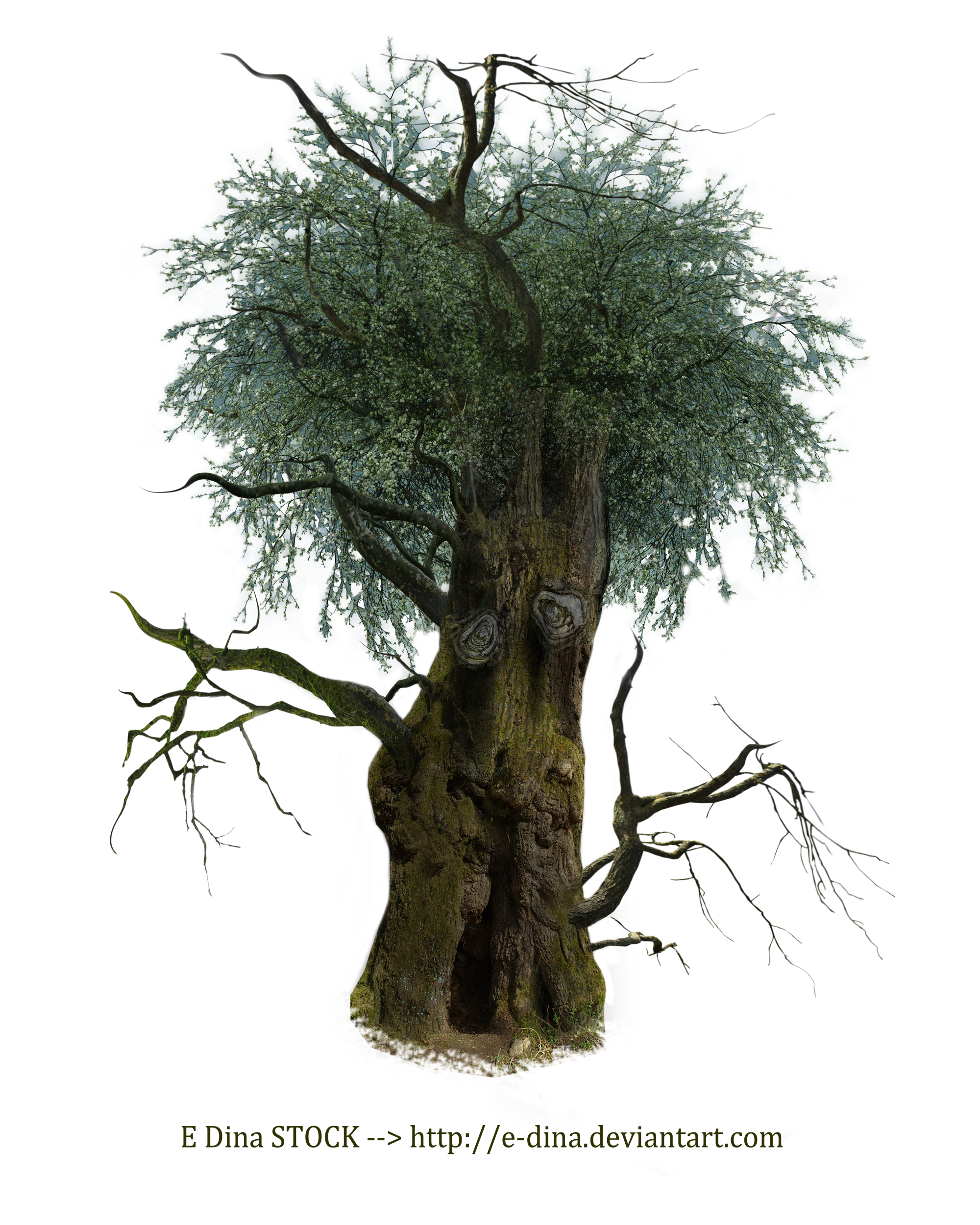 HQ PNG Stock Tree Man by E-DinaPhotoArt