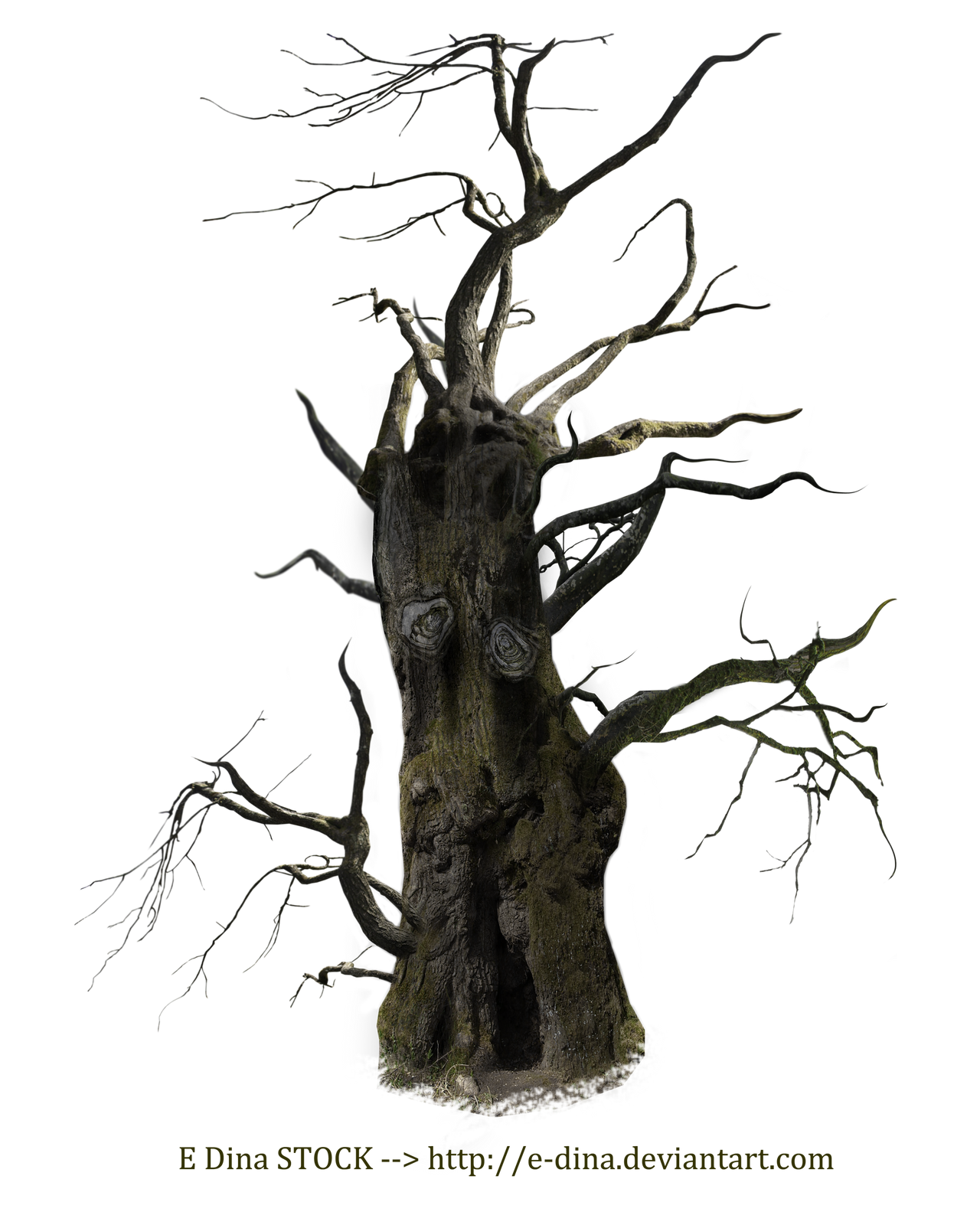 HQ PNG Stock Spooky Tree Mann