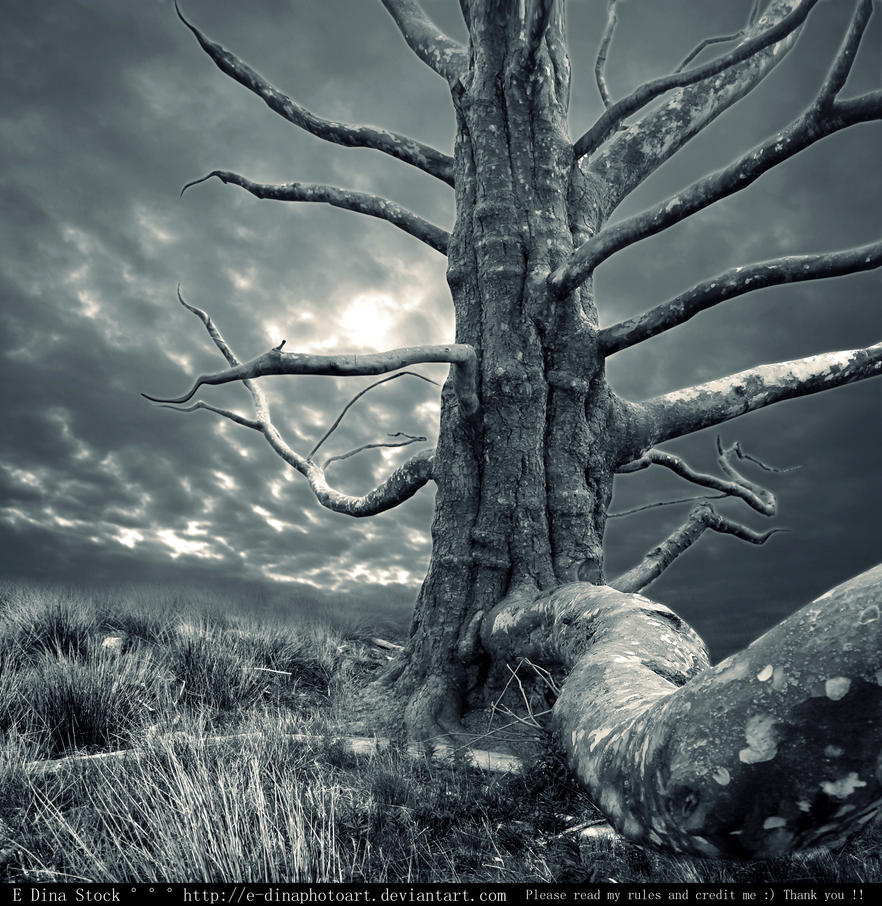 Premade BG Creepy Tree by E-DinaPhotoArt