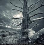 Premade BG Creepy Tree