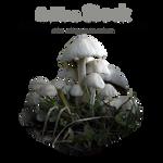 PNG Stock Mushrooms