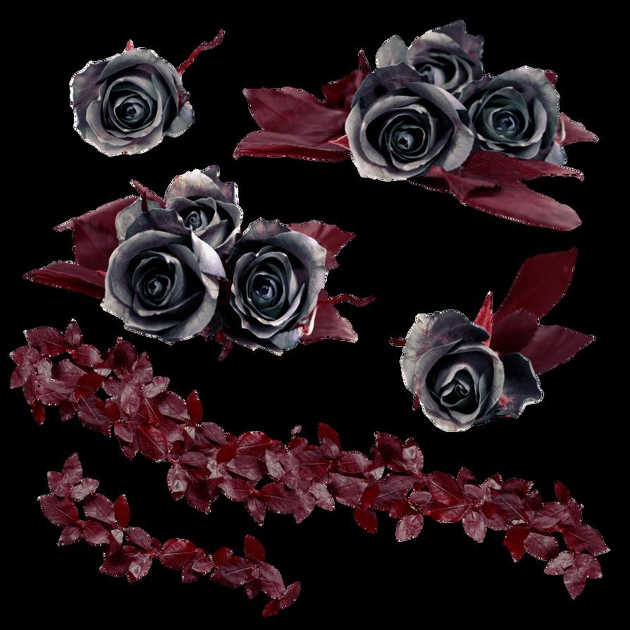 PNG Stock Black Roses by E-DinaPhotoArt