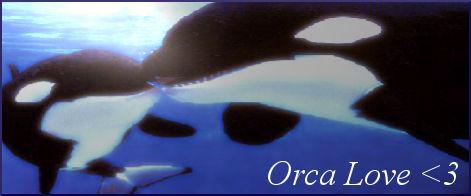 Orca Love Siggy