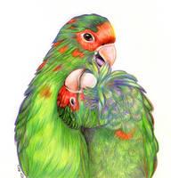 Parrots by ellyu