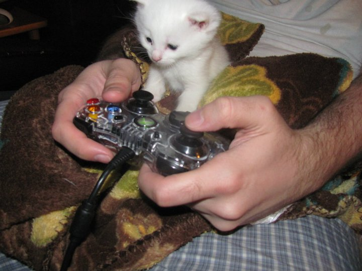 kitty_gamer_2_by_sayablood-d3ixxv8.jpg