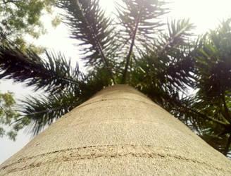 Natural Ladder by bogas04